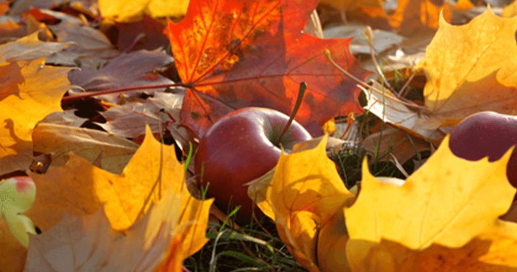 Hojas-otoño-manzana-de-dreiskel